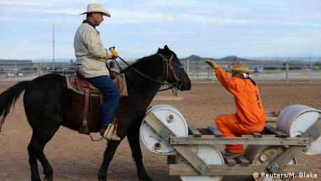 USA Wild Horse Inmate Program (Reuters/M. Blake)