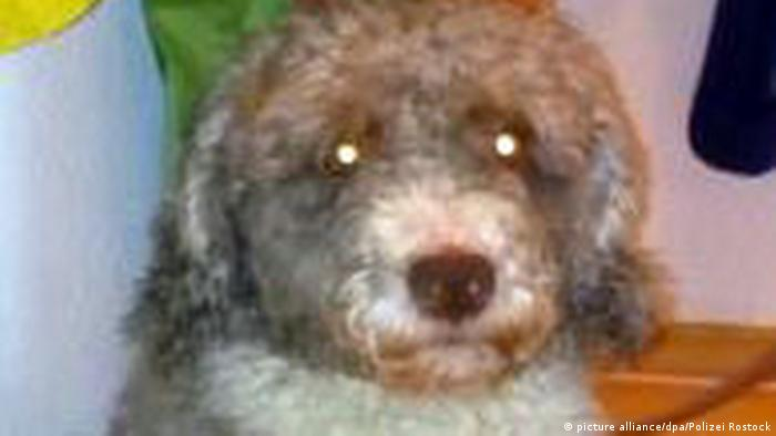 German man pretends his dog is a sheep to save taxes | News