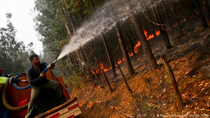 Waldbrände in Chile (Picture-Alliance/AP Photo/E. Felix)