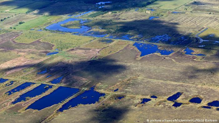 Дипхольцское болото (Нижняя Саксония)