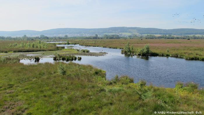 Deutschland Moorlandschaft Wollgras (NABU Minden-Lübbecke/S. Bulk )