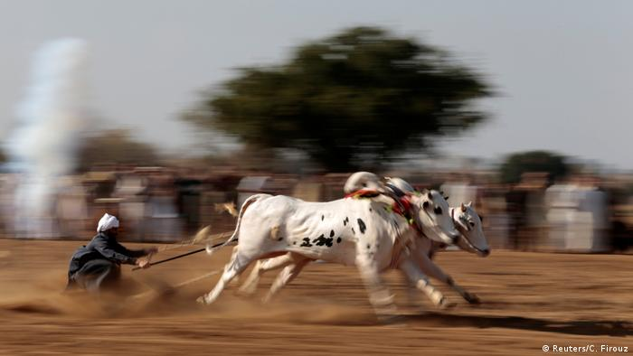 Pakistan Bullracing (Reuters/C. Firouz)
