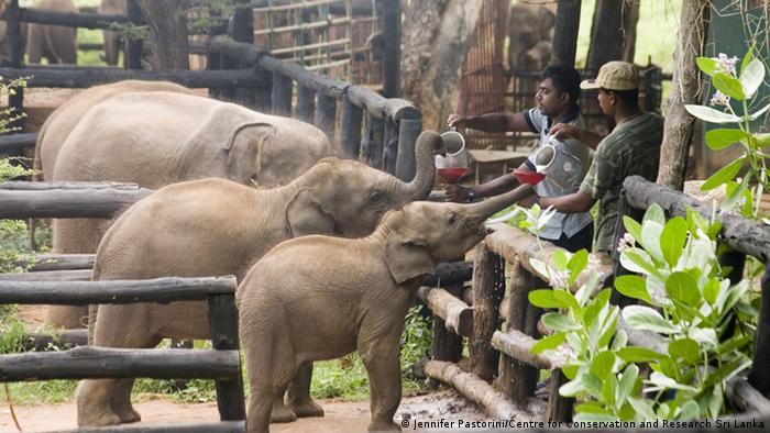Elefanten werden gefüttert