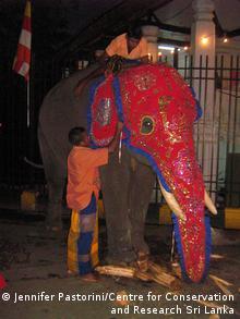 ein geschmückter Elefant mit Pflegern