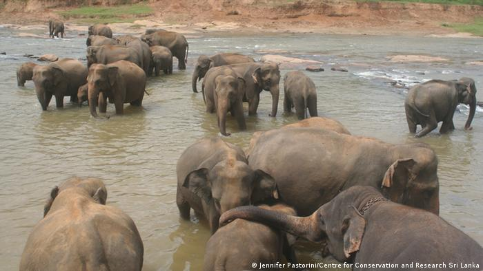 a few elephants in a river