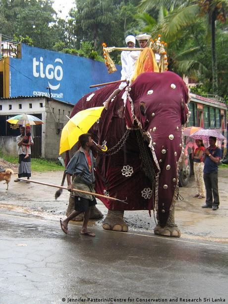 a dressed-up elephant with rider in a street