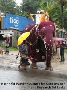 ein geschmückter Elefant mit Reiter in einer Straße