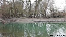 Wetland III