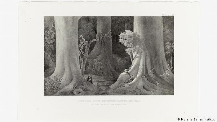 Ausstellung Carl Friedrich Philipp von Martius - Lithografie Brasilien (Moreira Salles Institut )