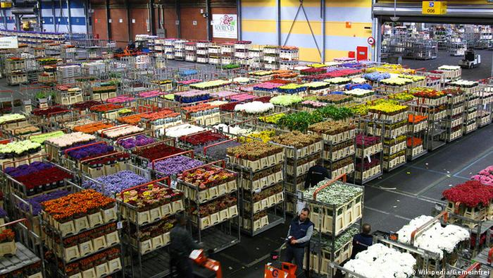 Photo of a warehouse full of crates containing cut flowers