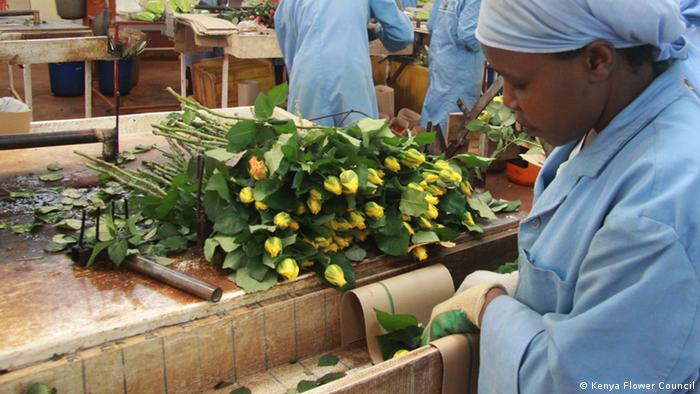 Global Ideas - Kenya Flower Council (Kenya Flower Council)
