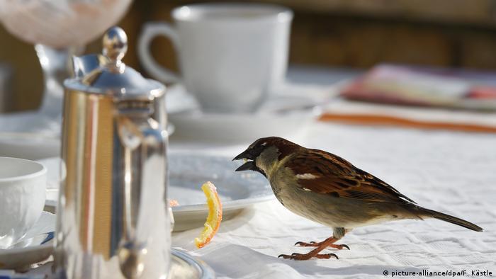 Spatz im Cafe (picture-alliance/dpa/F. Kästle)