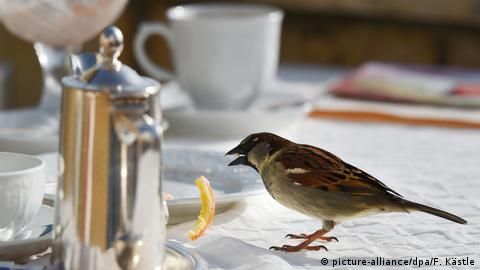 Spatz im Cafe (picture-alliance/dpa/F. Kästle)
