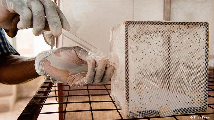 Tansania Mückenfalle 2 (DW/J. Groß)
