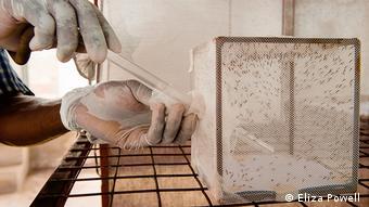 Παγίδα κουνουπιών στην Τανζανία