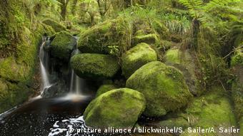 BG Neuseeland - Ärger im Paradies | Kaskade im Regenwald (picture alliance / blickwinkel/S. Sailer/A. Sailer)