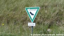 Amrum - Duenen (picture-alliance/dpa/B. Schleep)