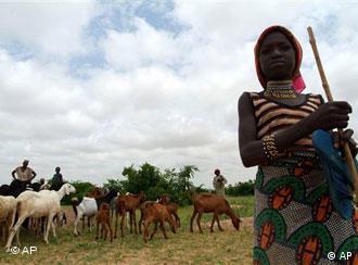 L'élevage dans la région très aride de Maradi