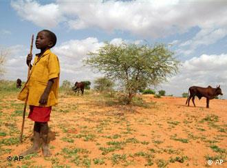 An African youth leads cattles to graze in dry land