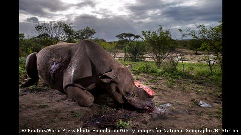World Press Photo Awards 2017 - Nature - First Prize, Stories - Brent Stirton, Getty Images for National Geographic Magazine (Reuters/World Press Photo Foundation/Getty Images for National Geographic/B. Stirton)
