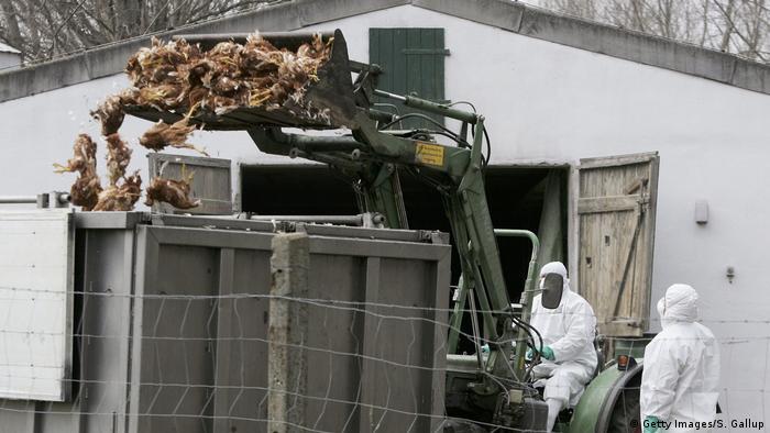 Deutschland Vögel werden entsorgt
