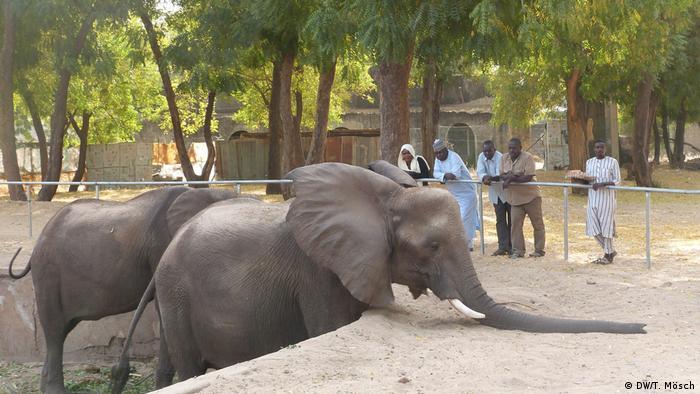 Borno - Elefanten im Zoo von Maiduguri (DW/T. Mösch)