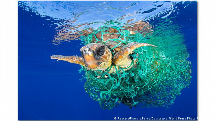 Image result for plastic pollution in the ocean images