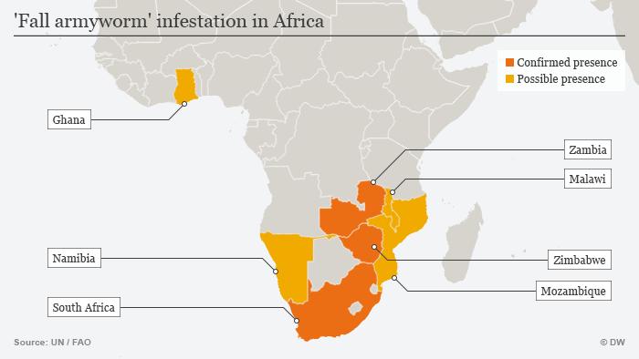 Infografik Karte Armyworm in Afrika ENG