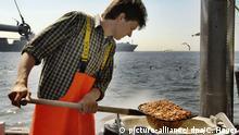 Deutschland Krabbenfischer - Die Jagd nach dem «roten Gold der Nordsee» (picture-alliance/ dpa/C. Hager)