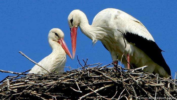 Celebrate migratory birds because ′their future is our future