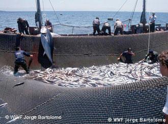 Países africanos têm dificuldade para fiscalizar pescadores europeus