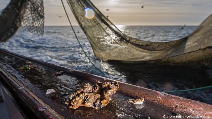 Deutschland Fangfahrt auf dem Krabbenkutter