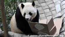 USA Washington - Panda Bao zieht nach China (picture-alliance/Photoshot/Y. Bogu)