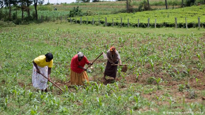 Seljaci u Keniji: kako smanjiti potrošnju pesticida?