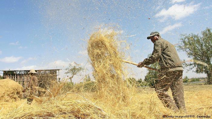 Landwirtschaft Äthiopien Dreschen von Hirse