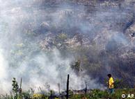 Lahan hutan di Riau yang dibakar untuk dijadikan areal perkebunan (AP Photo/Tatan Syuflana)