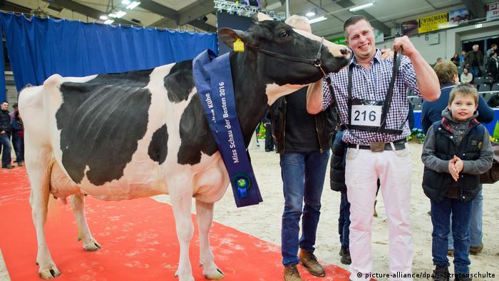 Schau der Besten Schönheitswettbewerb für Kühe (picture-alliance/dpa/J. Stratenschulte)