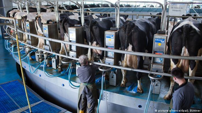 Deutschland Milchproduktion
