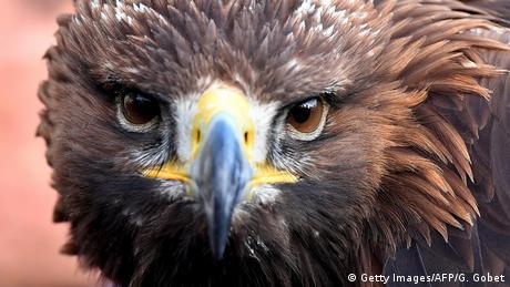 Frankreich Adler zur Bekämpfung von Dronen (Getty Images/AFP/G. Gobet)