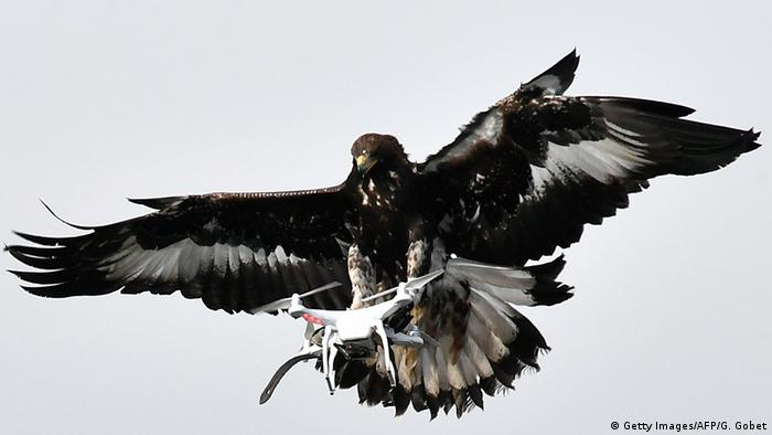Eagle clutches a drone in its talons