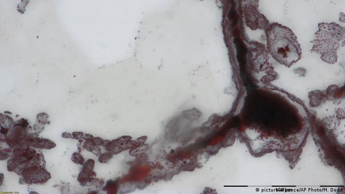 Micro Fossils (picture-alliance/AP Photo/Matthew Dodd)