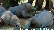 ***Archivbild*** Säugetiere/Elefanten Afrikanischer Elefant Loxodonta africana African elephant Elephant d'Afrique Junge Kälber 03 liegend schlafend ruhend calves 03 sleeping Samburu NR Kenia Afrika | Verwendung weltweit