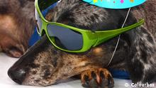 Hundeleben (Colourbox)