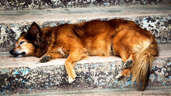 Ein Hund macht Siesta und schläft auf einer Treppenstufe (Colourbox/I. Terekhov)