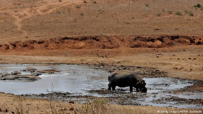 Afrika Kenia - Nilpferd an Wasserloch
