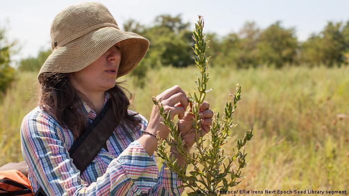 Ellie Irons, Hunting for Seeds (Anne Percoco/ Ellie Irons Next Epoch Seed Library segment)