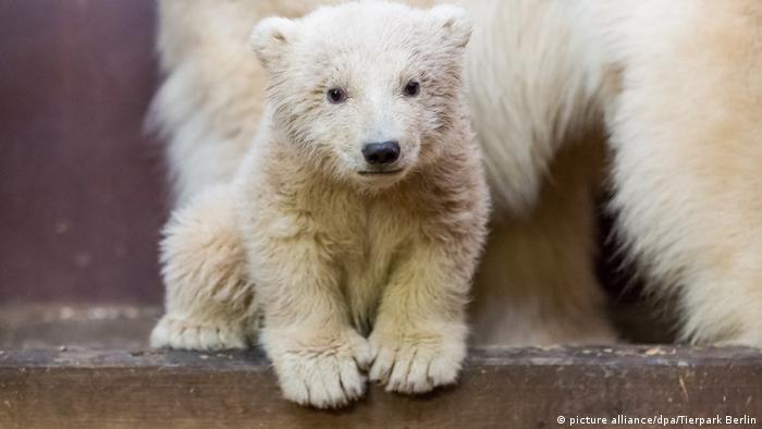 Baby polar bear Fritz (picture alliance/dpa/Tierpark Berlin)
