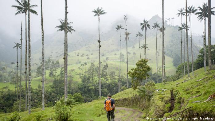 Kolumbien Wachspalme im Cocora Tal (picture-alliance/robertharding/A. Treadway)