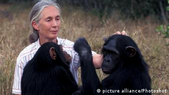 Jane Goodall in 1960 observing chimpanzees creating tools
