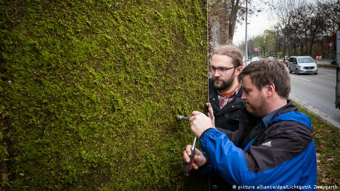 Germany: Moss walls against air pollution (picture alliance/dpa/Lichtgut/A. Zweygarth)